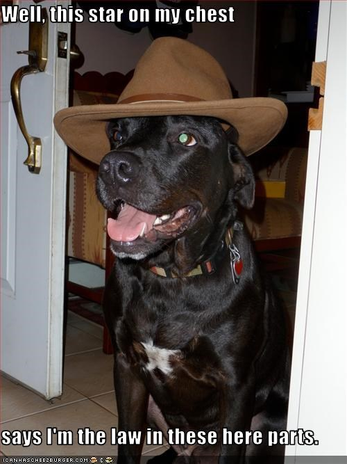hat,labrador,law,police,sheriff,star