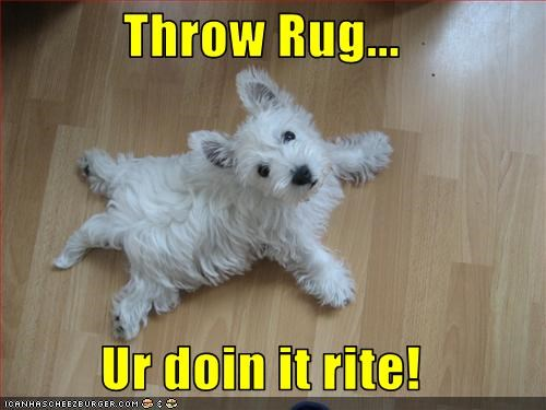 doin it rite,flat,rug,throw,west highland white terrier