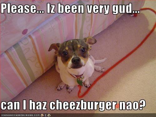 Cheezburger Image 2587829248