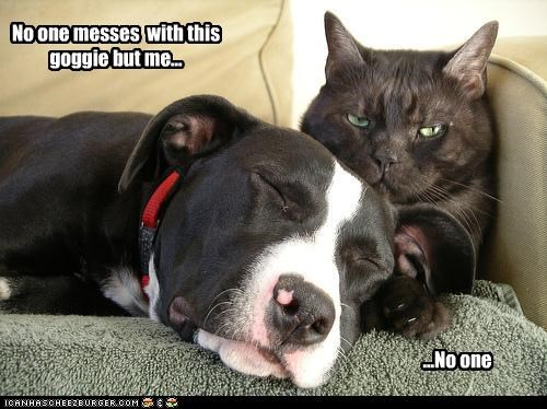 cuddle lolcats mess pitbull protection - 2588330240