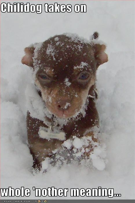 chihuahua,chili,cold,meaning,snow