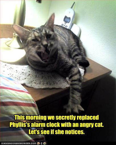 alarm clock angry sleeping - 2590056960