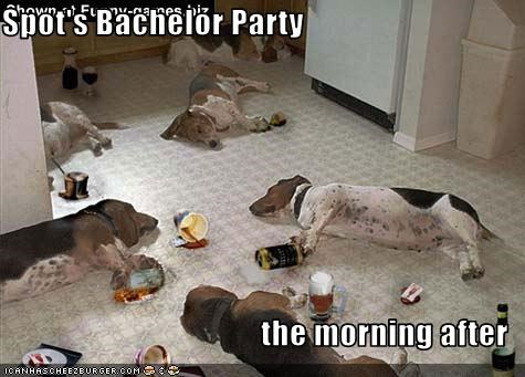 alcohol basset hound beer drink Party passed out