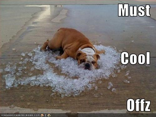 belly bulldog cool hot ice - 2590728448