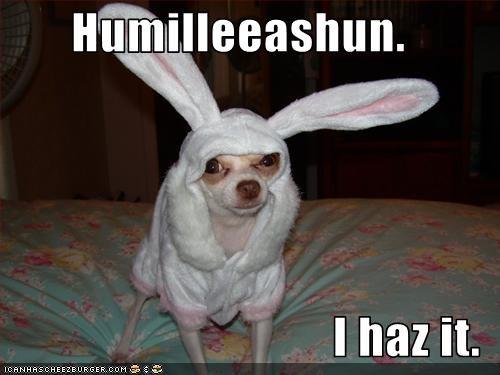 bunny chihuahua costume dignity humiliation - 2591149056