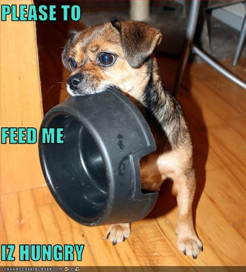 Cheezburger Image 2591162624
