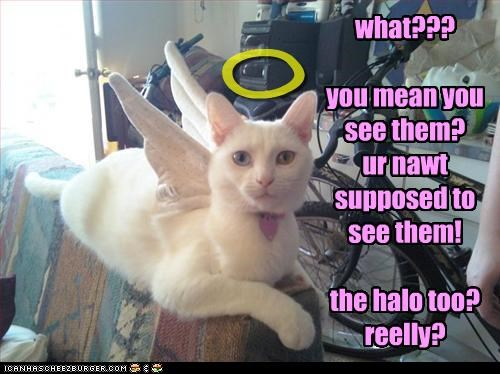 what???  you mean you see them? ur nawt supposed to see them!  the halo too? reelly?