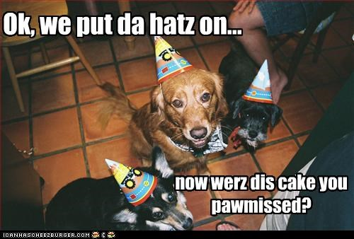 birthday,cake,dachshund,hats,promise,scottish terrier