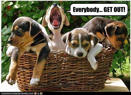 basket,beagle,out,puppies,shout