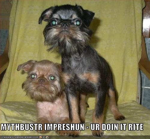 Brussels Griffons doin it rite impression jamie hyneman mustache mythbusters - 2593384960
