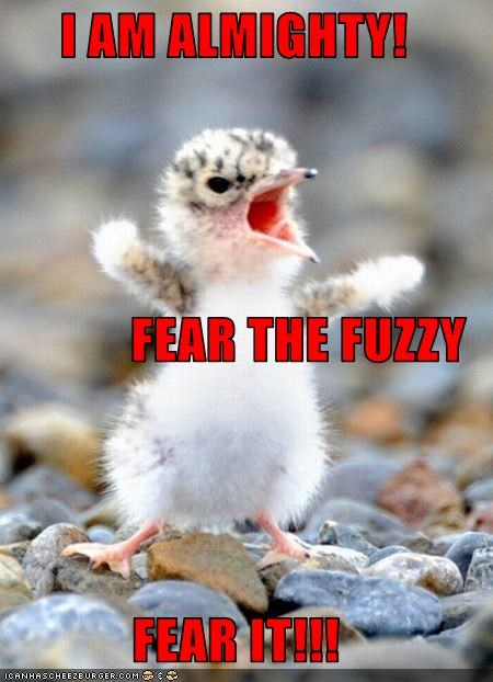 I Am Almighty Fear The Fuzzy Fear It Cheezburger Funny Memes