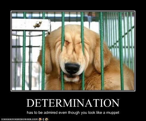 DETERMINATION has to be admired even though you look like a muppet