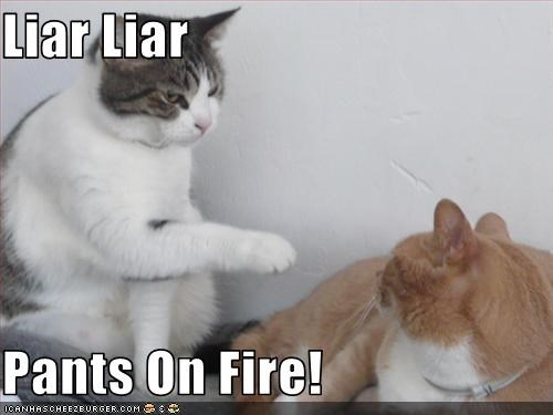 Image result for cat meme liar liar