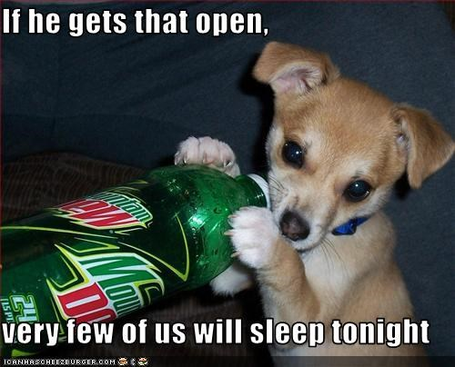 awake caffeine chihuahua drink mountain dew puppy sleep soda - 2594751744