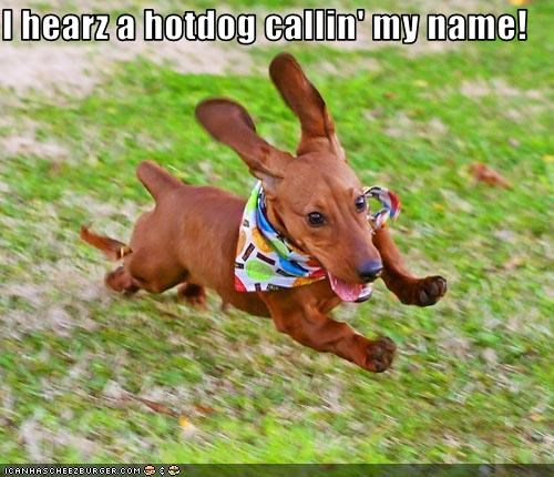 call dachshund hotdog hoverdog name running - 2595524864