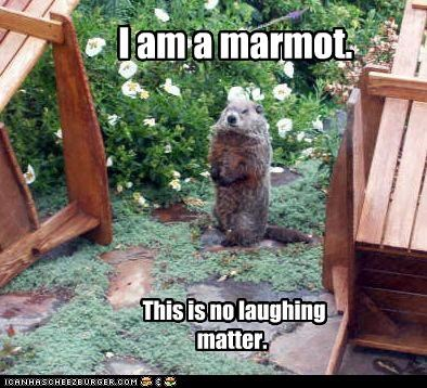 I am a marmot. This is no laughing matter.