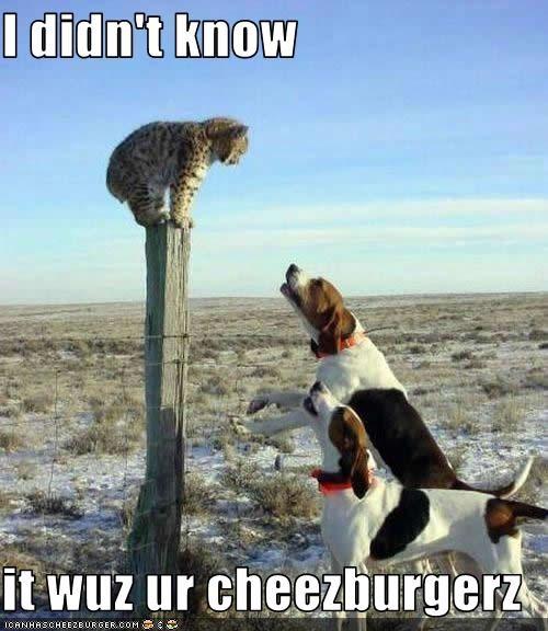 Cheezburger Image 2596426752