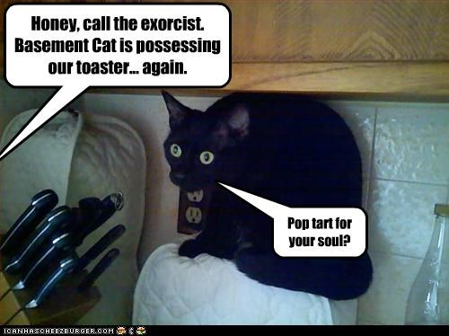 basement cat toaster - 2597024512