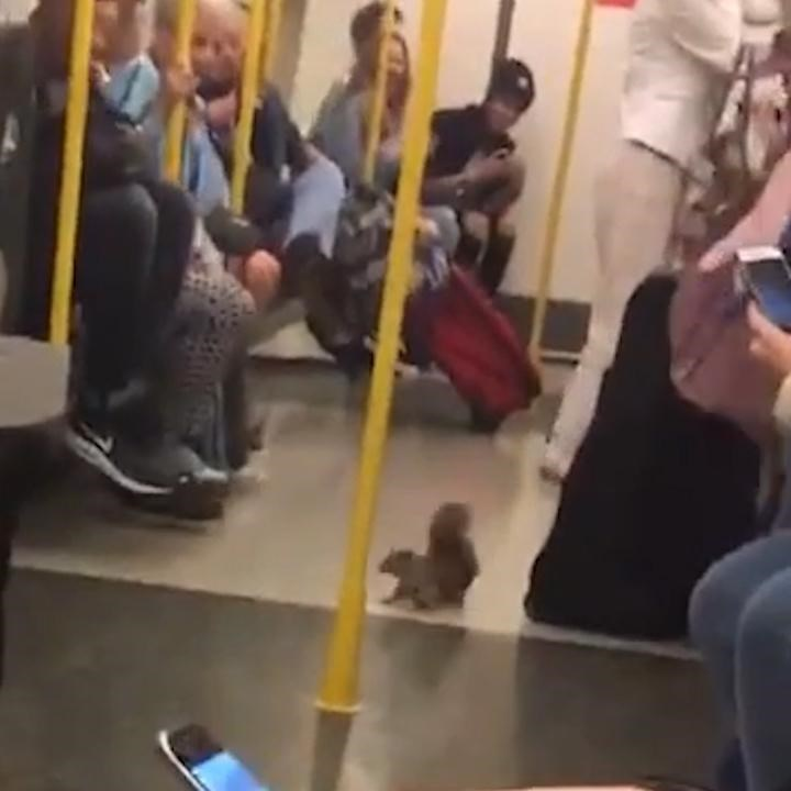 a squirrel running up and down the aisles of a train in London - cover for a story of a squirrel that decided to ride the train.