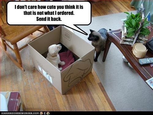 box,labrador,lolcats,mean,ordering,puppy