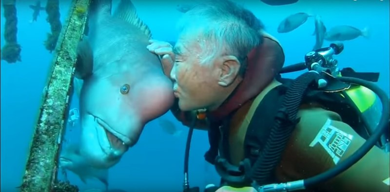 A unique friendship between a diver and a fish