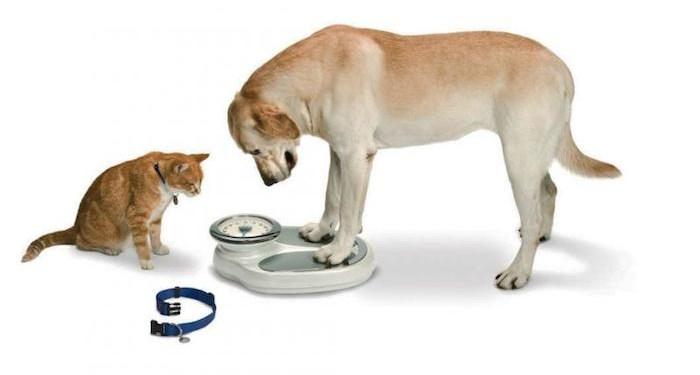 a new research discovered the states with the most fat pets