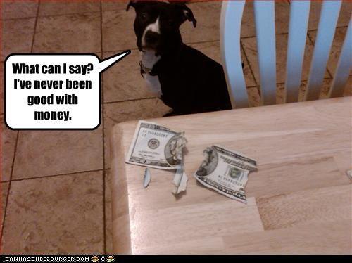 destruction money pitbull shredding - 2598899200