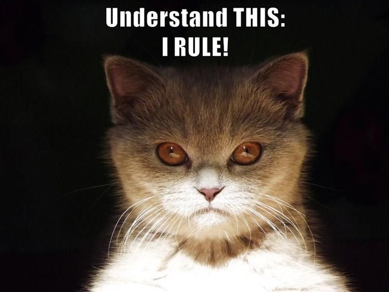 A photo of a kitten that looks very angry staring at someone saying that you need to know that cats rule - cover photo for a list of the users of cheezburger submitting memes