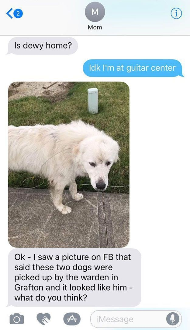 son tweets about his mom not recognizing their family dog