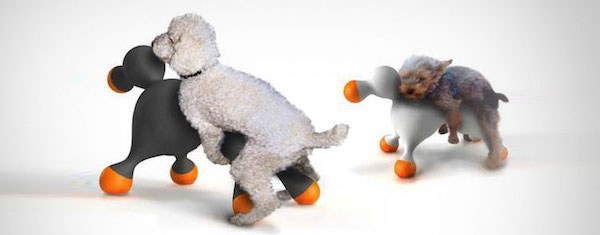 Funny accessories for dogs