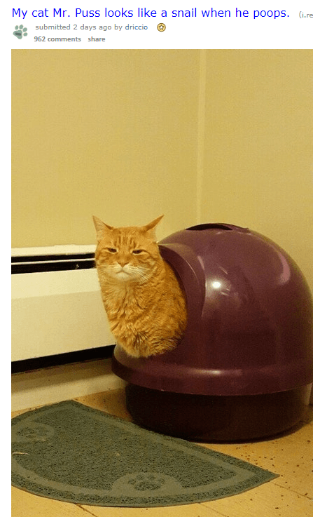 cat pooping looks like a snail and gets a special treatment from the internet