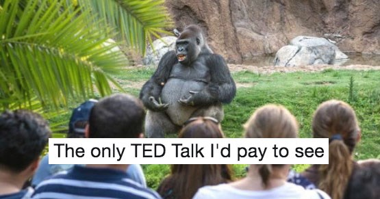 Collection of funny memes about the TED talk gorilla who looks like he is giving a lecture at the Los Angeles Zoo.