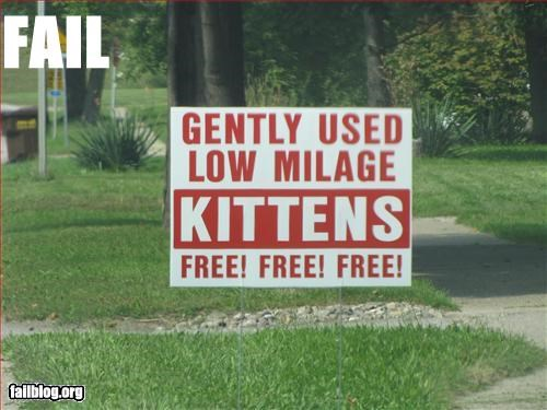 advertisement free g rated kitten signs used - 2603188736