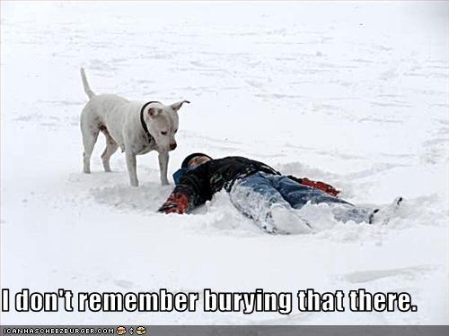 bury human owner pitbull snow - 2603747840