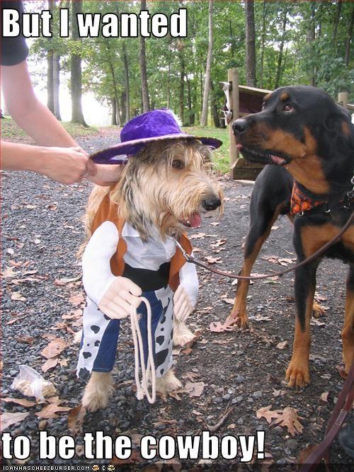 costume,cowboy,hats,jealous,rottweiler