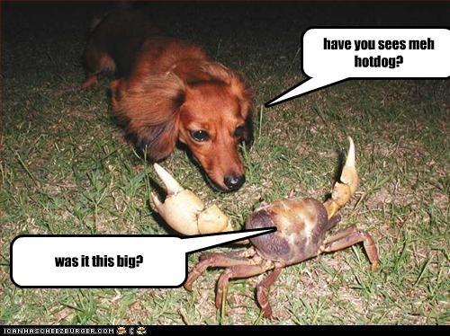 Cheezburger Image 2604748544