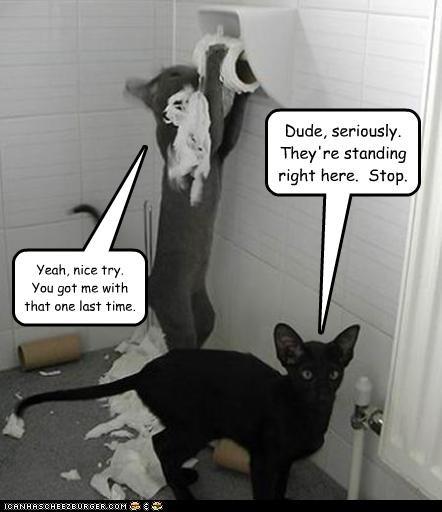 bad cat destruction mess toilet paper - 2605453056