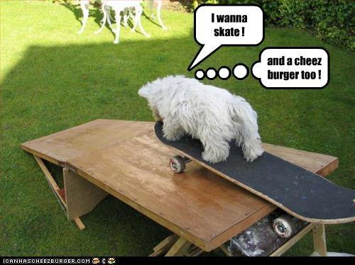 I wanna skate ! and a cheez burger too !