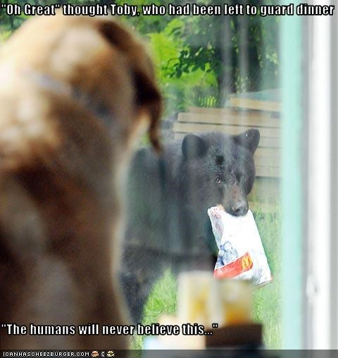 bear believe dinner food guard dog humans whatbreed