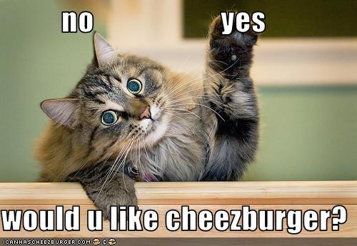 Cheezburger Image 2607329792