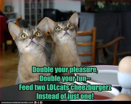 cheezburger friend want - 2607688960