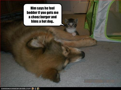 Play along goggie..play along. Him says he feel bedder if yoo gets me a cheez burger and hims a hot dog.. gggggggggg