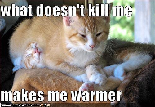 annoying friend nap warm - 2609539328