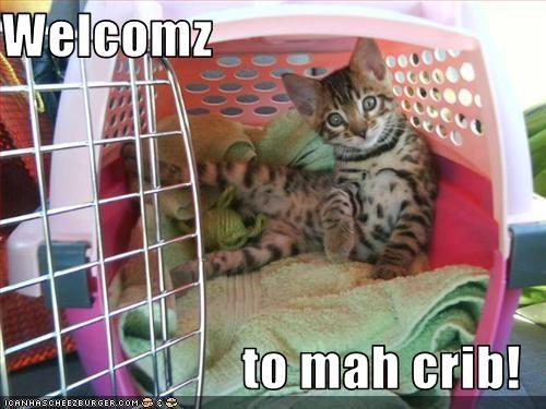 crib cute kitten - 2610404608