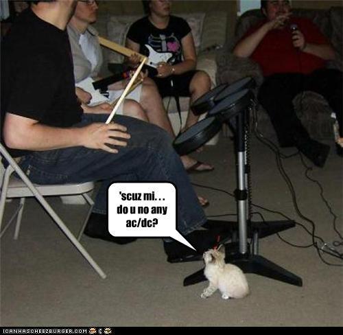 cute kitten Music - 2610524416