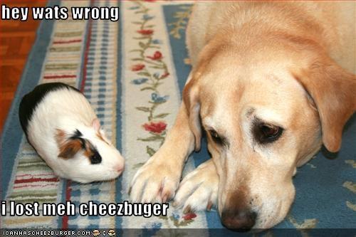 Cheezburger Image 2610784000