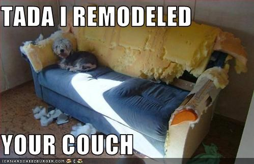 couch destroyed destruction whatbreed - 2611027456