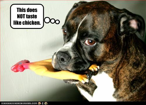 boxer chicken flavor rubber chicken taste toys