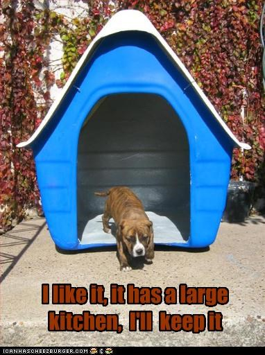 dog house,kitchen,large,moving,pitbull