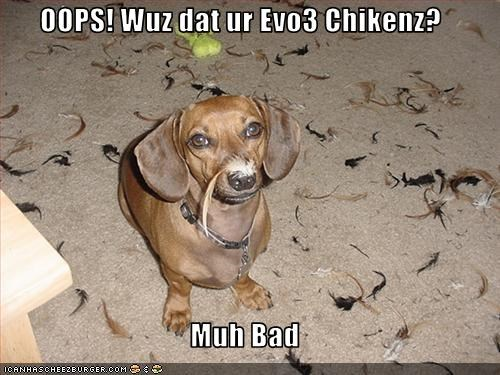 Cheezburger Image 2611426304